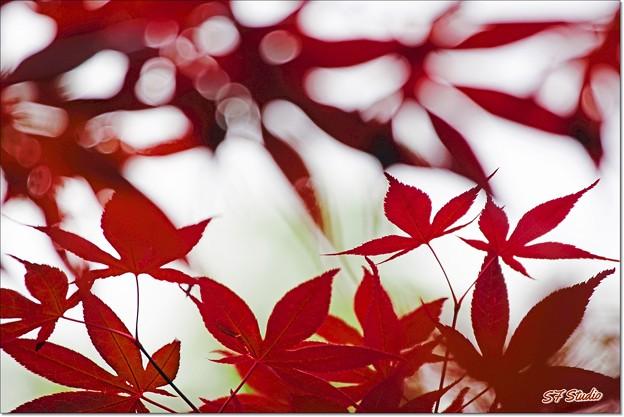 Photos: 初夏の紅葉