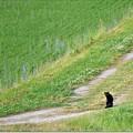 黒ネコのタンボ