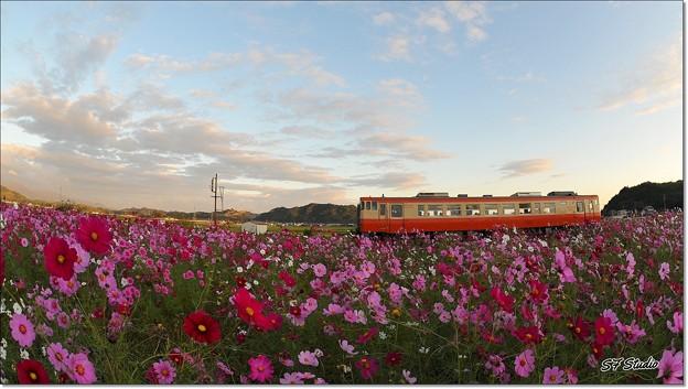コスモス列車