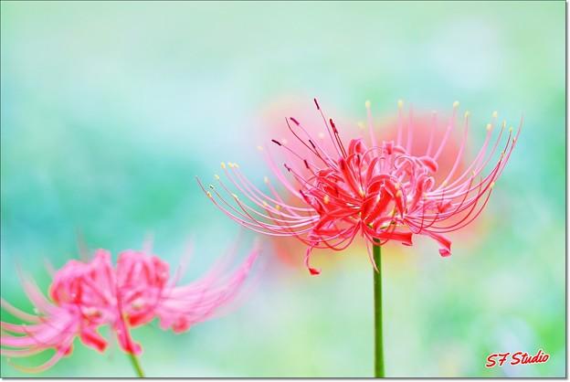 Photos: 畔の華