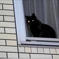 Photos: 窓辺のCoCoちゃん
