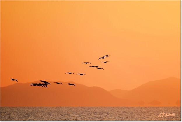 朝焼けの飛翔