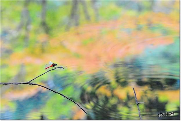 Photos: 秋の訪れ