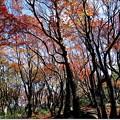 紅映える林間