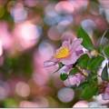 山茶花の楽園