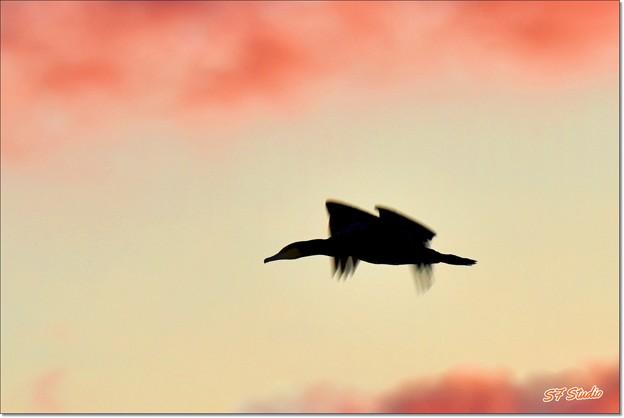 Photos: 初日に飛ぶ