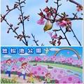 笠松池公園の河津桜