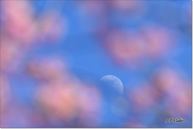 Photos: 花見月