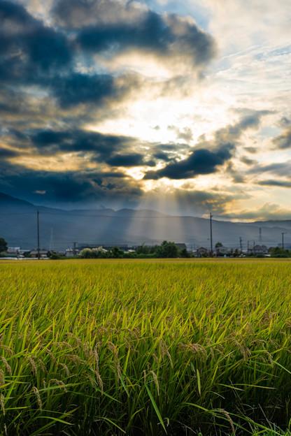 Photos: お彼岸の田んぼ