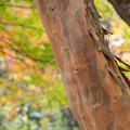 Photos: 森に隠れた木