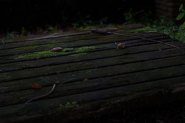 苔むすベンチ