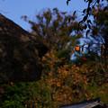 Photos: 古民家スナップ191117 柿の木