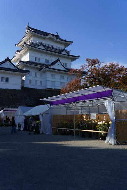 Photos: 小田原スナップ191117 小田原城