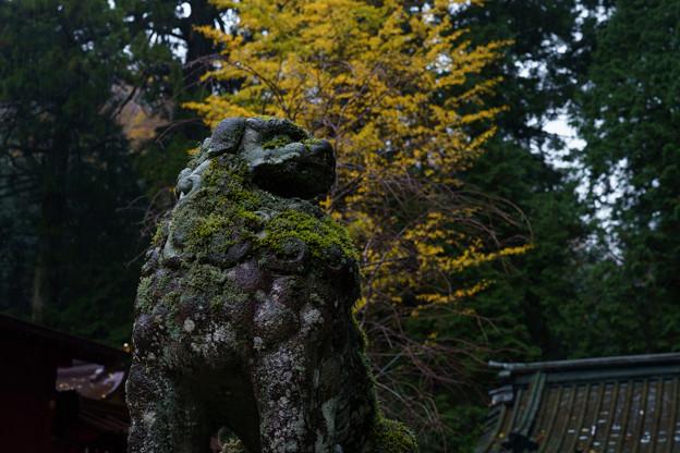 箱根神社狛犬