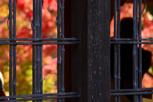 窓の向こうは秋景色