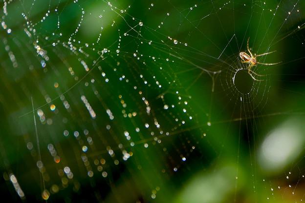 雨上がりの蜘蛛の巣