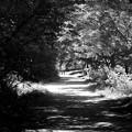 Photos: forest