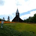 Photos: マリーゴールドが咲く丘