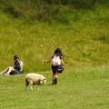 羊と遊ぶ女の子