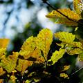 葉っぱ色ずく秋