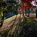 紅葉と長い陰