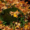 Photos: 秋の終わり