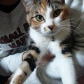 ニャンニャンニャン♪(=^ェ^=) #猫の日