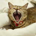 愛猫 小竹 まだまだ眠いニャー