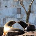 Photos: 東山動物園にて