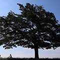 Photos: この木何の木気になる木