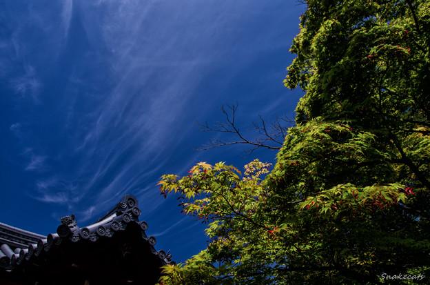 「青紅葉」 勧修寺 - 京都
