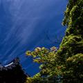 Photos: 「青紅葉」 勧修寺 - 京都