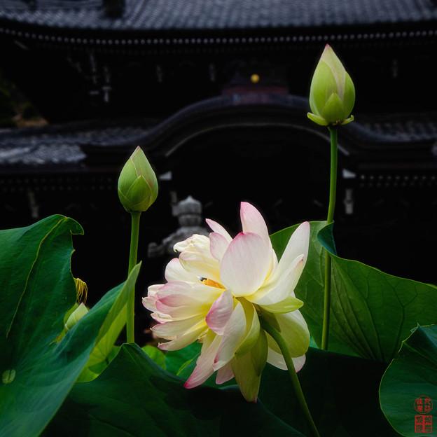 Photos: 「生滅」 - 三室戸寺 京都 -