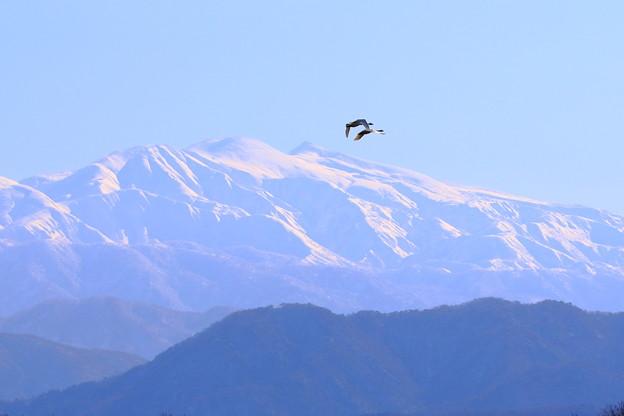 北陸に滅多にない晴天の白山と白鳥図