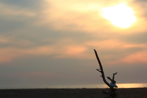 Photos: すずめの墓標~大空へ