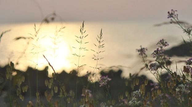 Photos: 浜辺の鎮魂歌