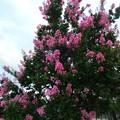 Photos: 花の散歩道