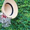 Photos: あの麦わら帽子