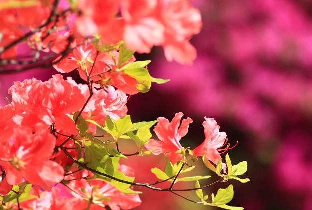 Photos: 五月の彩