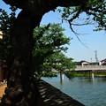 Photos: 五月の風に~