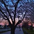 Photos: 春の宵~