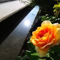 Photos: 朝陽のように爽やかに~♪
