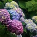 Photos: 花の色~♪