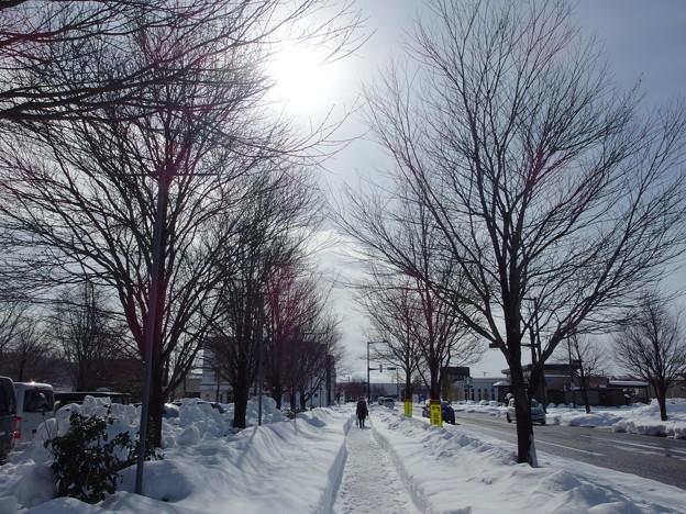 冬の散歩道~♪