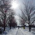 Photos: 冬の散歩道~♪