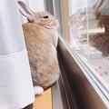 Photos: もこちゃん