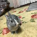 Photos: ぴょんくん