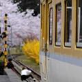 Photos: 春のひと時