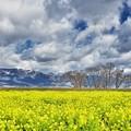 写真: 春一番の日