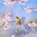 写真: 春の舞